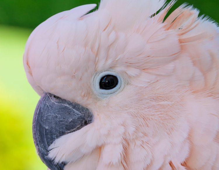 bird-3080259