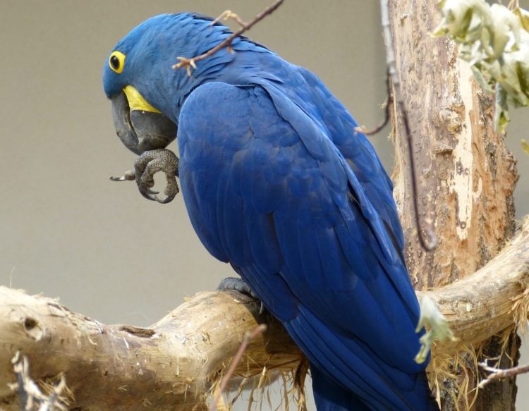 bird-711051
