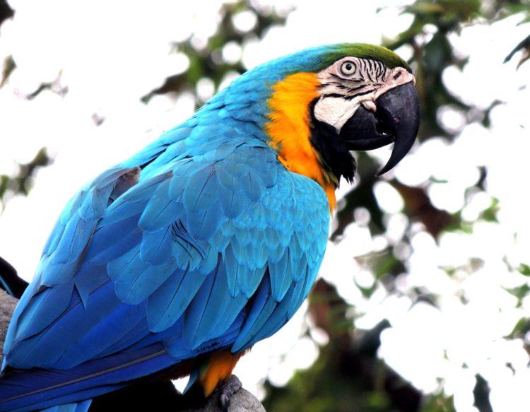 macaw-410144