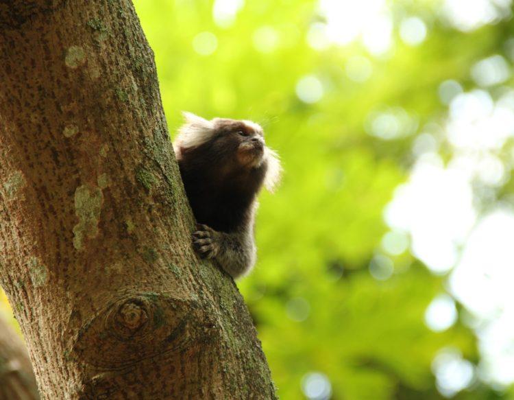 mico-1208064
