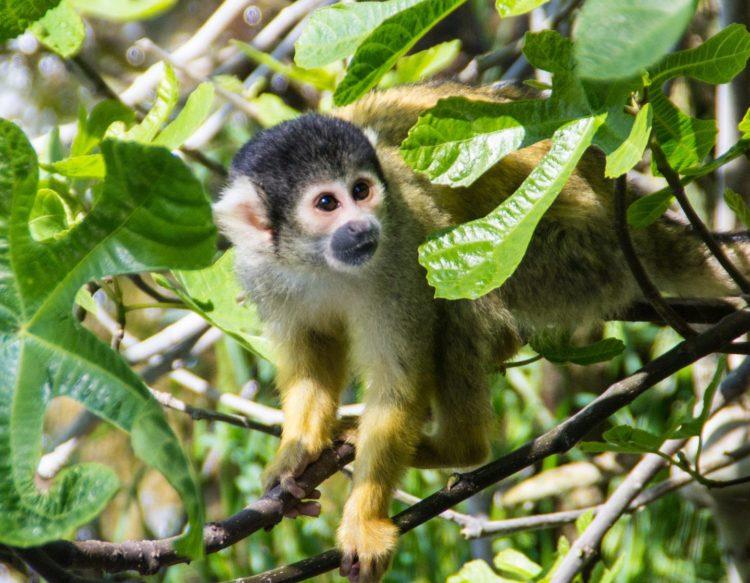 monkey-1307046