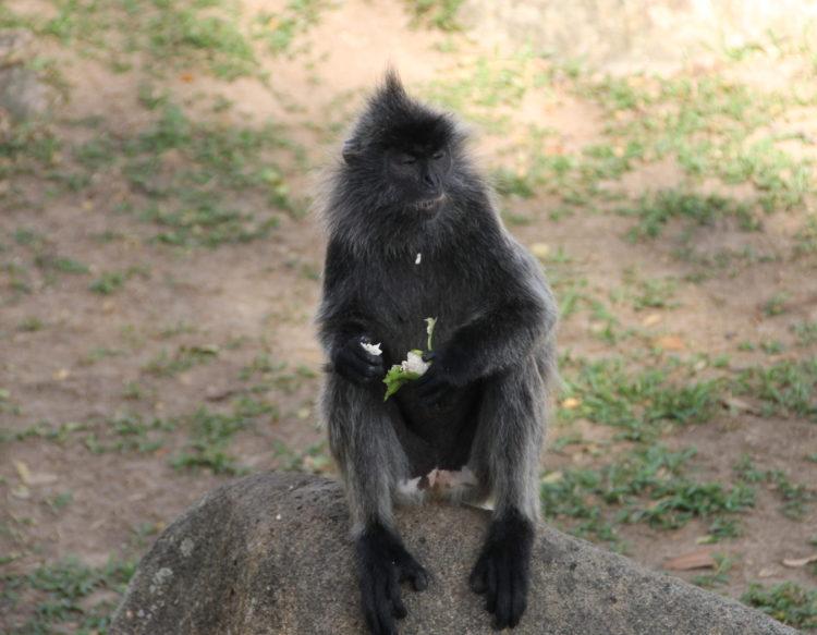 monkey-1616104