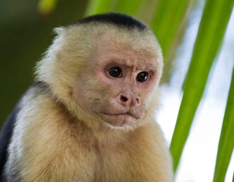 monkey-2139295