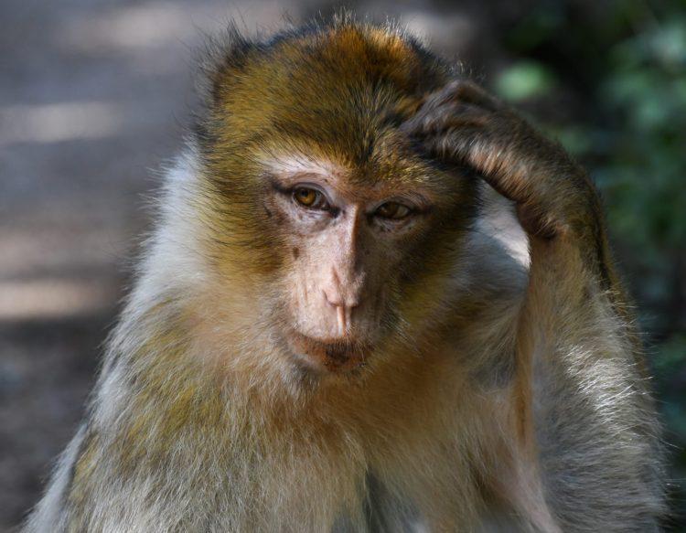 monkey-2790482