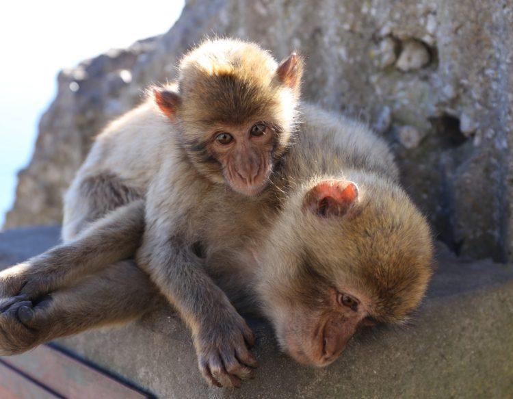 monkey-3193740