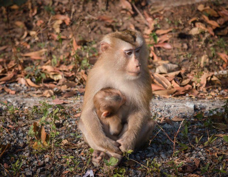 monkey-3200364