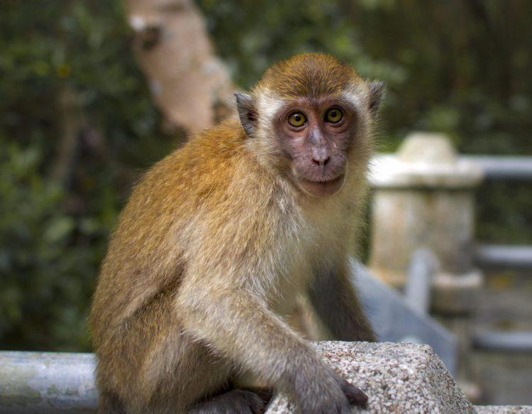 monkey-3243666