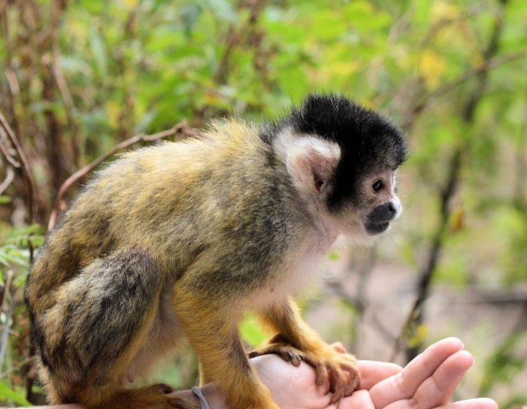 monkeys-314412