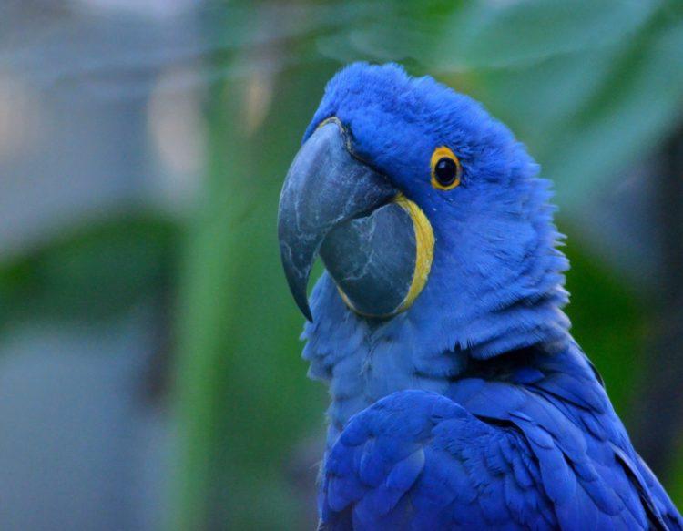 parrot-1182931