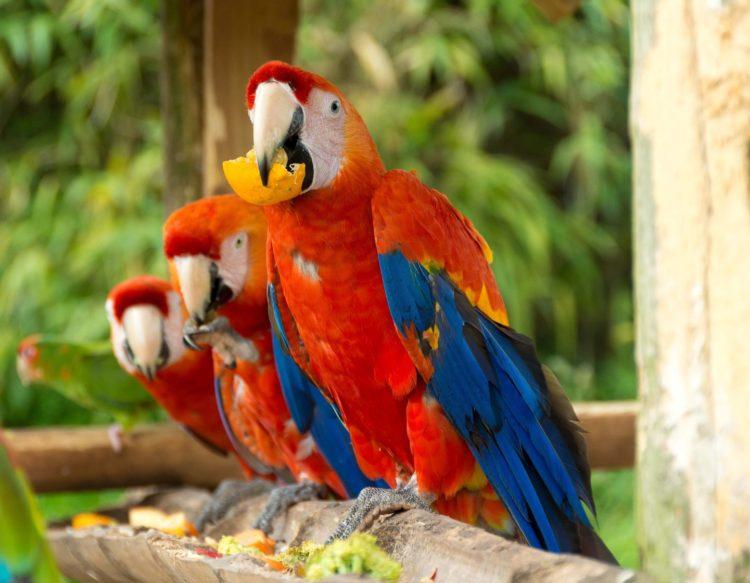 parrot-1807176