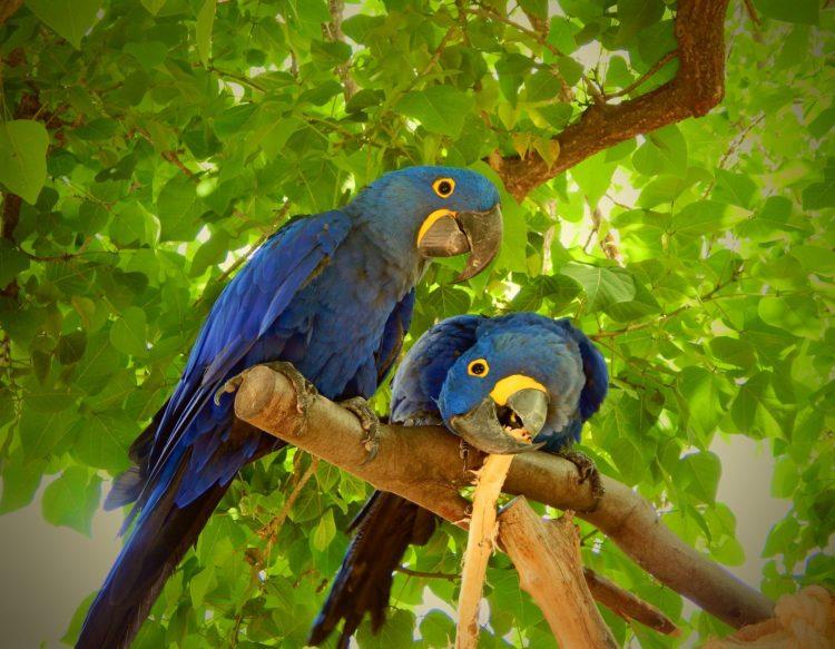parrot-1934513