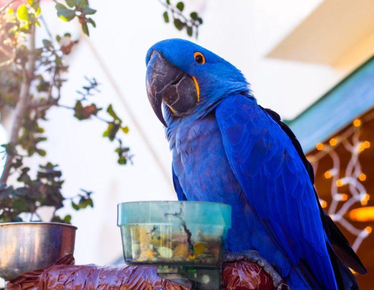parrot-2110063