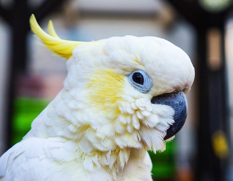 parrot-2509677_1