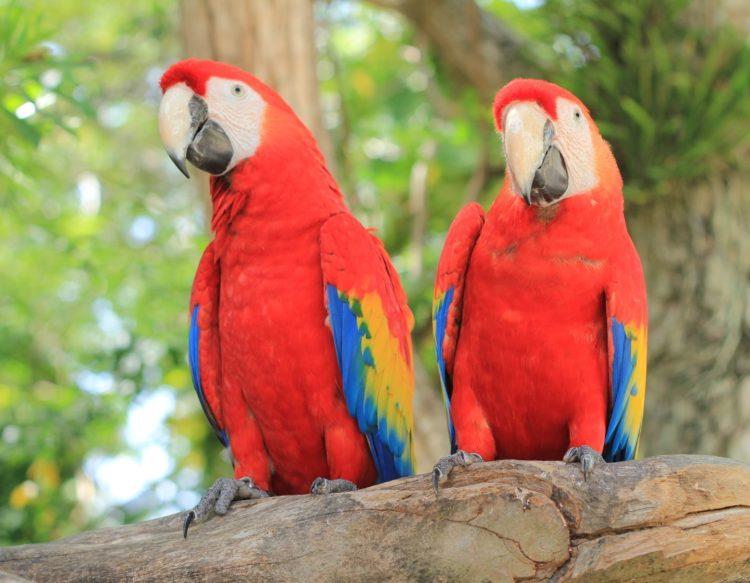 parrot-2708091