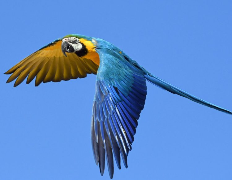 parrot-2796766