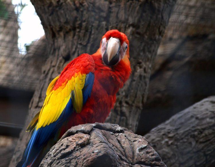 parrot-2987075