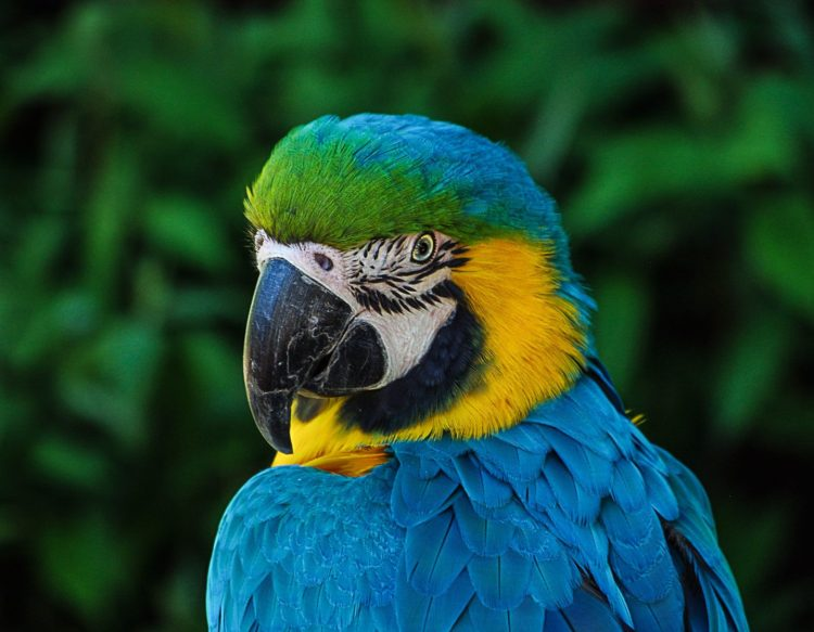 parrot-320006