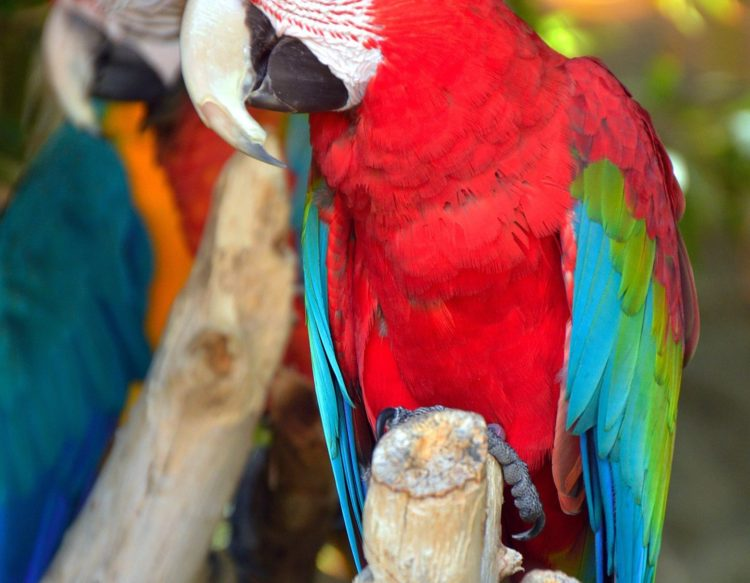 parrot-by-temperamen