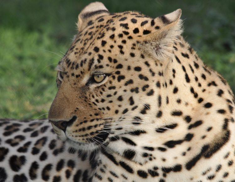 wildlife-3322861